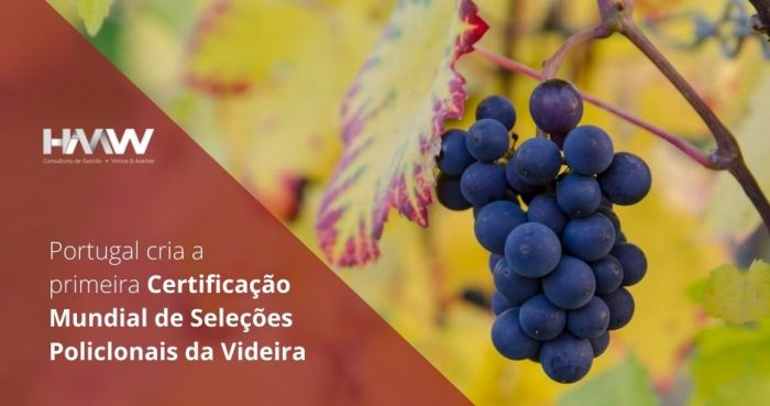 Portugal 2020 Consultoria HM Consultores HMW
